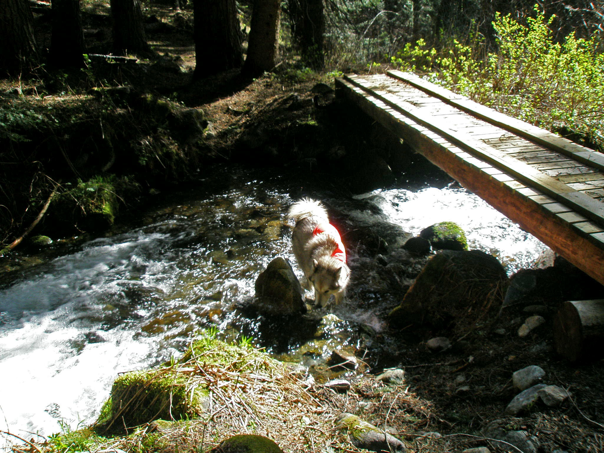 dogs in stream