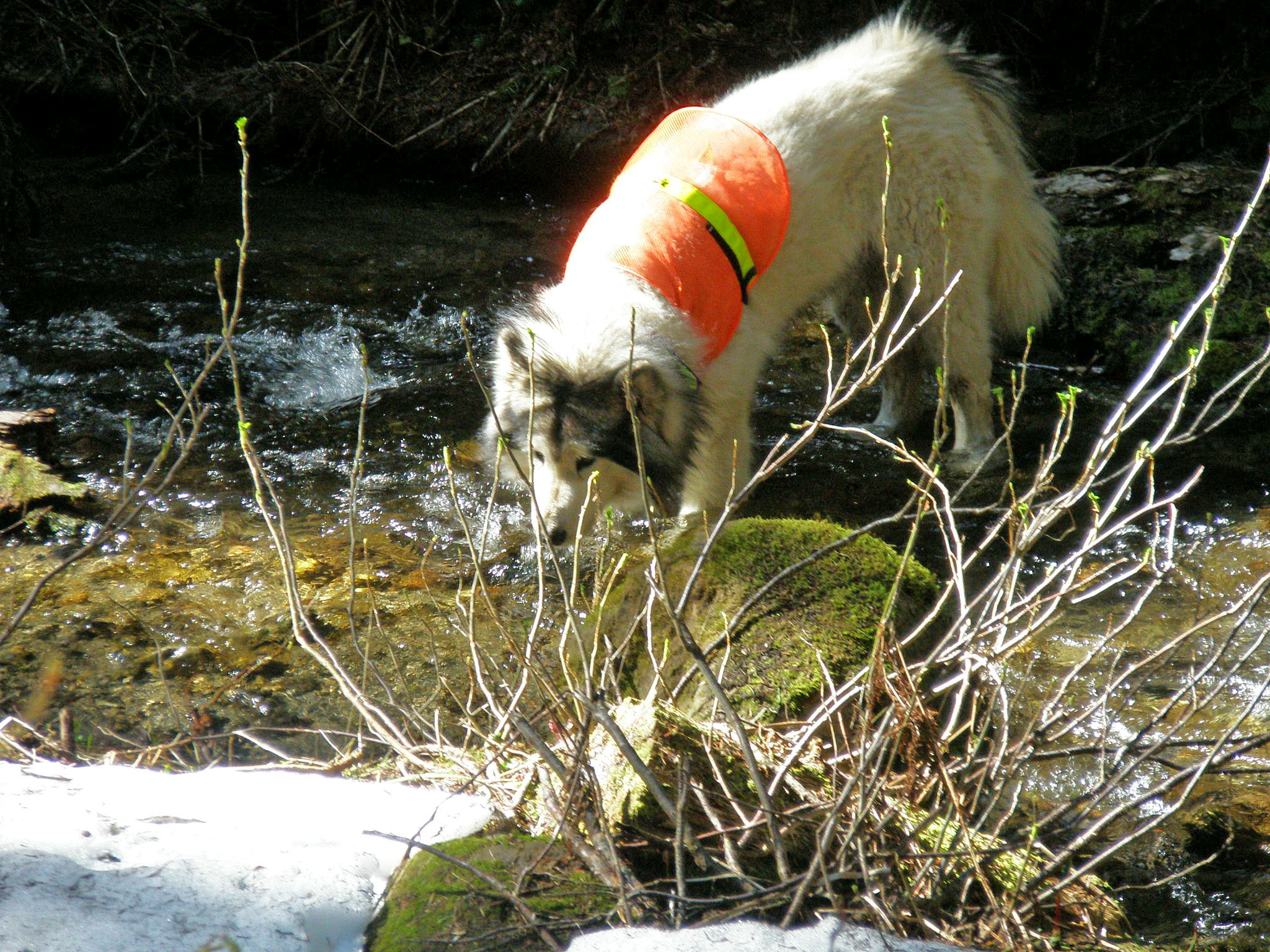 dog in stream