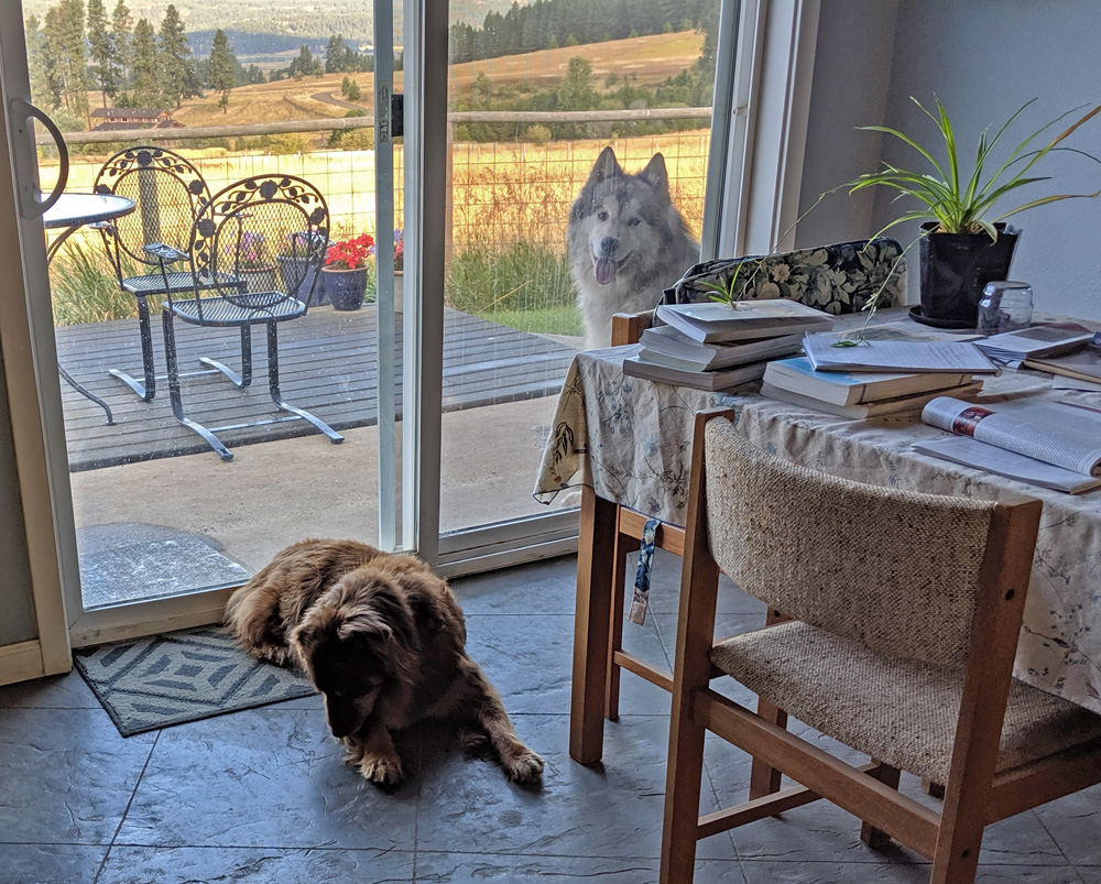dogs, house