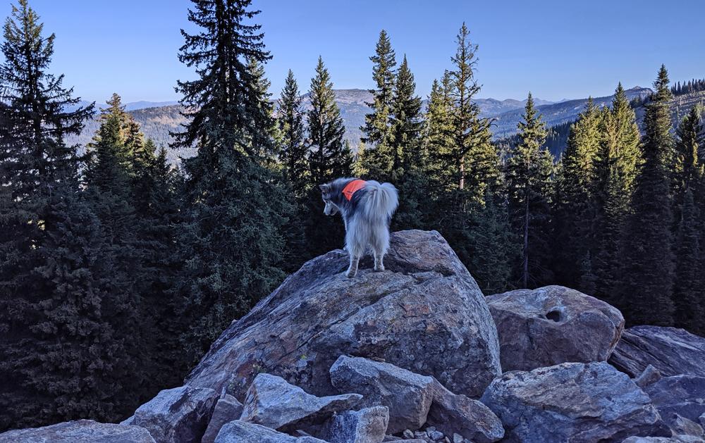 dog on boulder