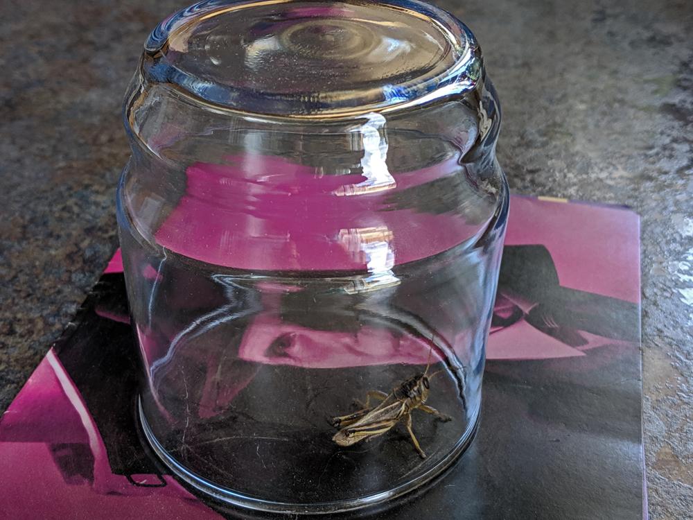 cricket under glass