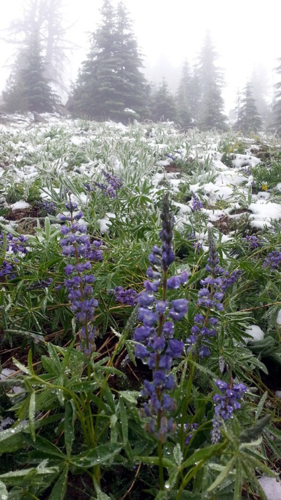 wildflowers and snow