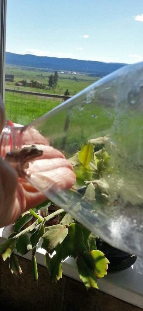 frog, bottle