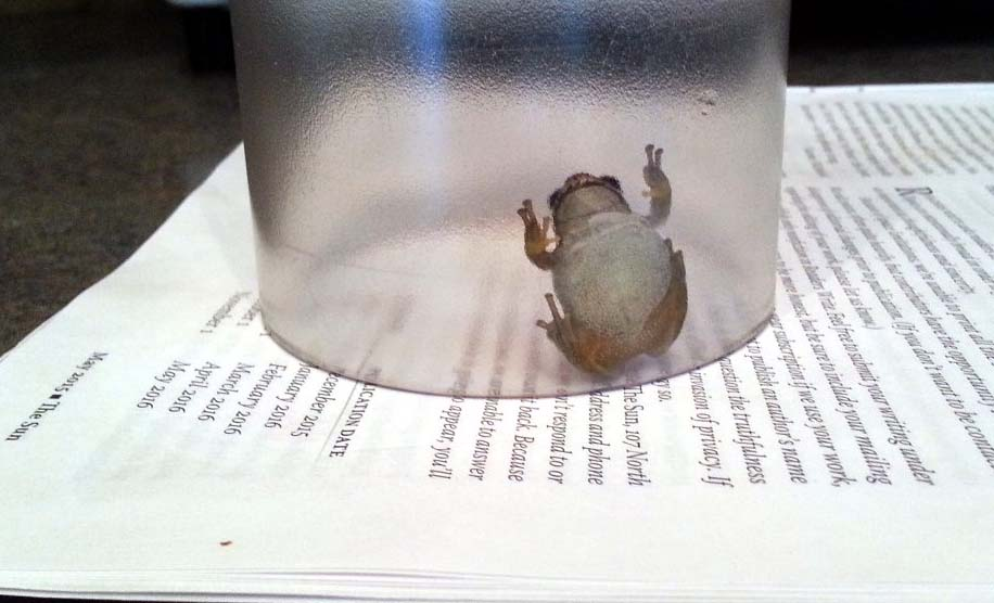frog in glass