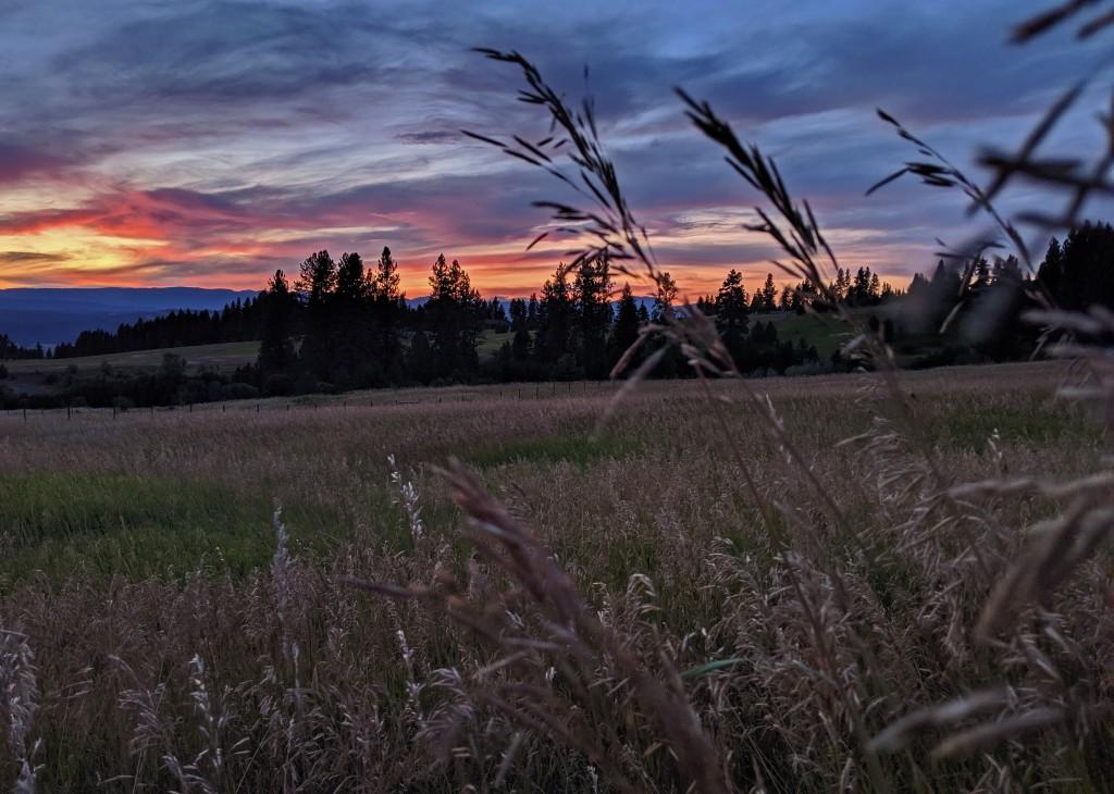 field, grass, sunset