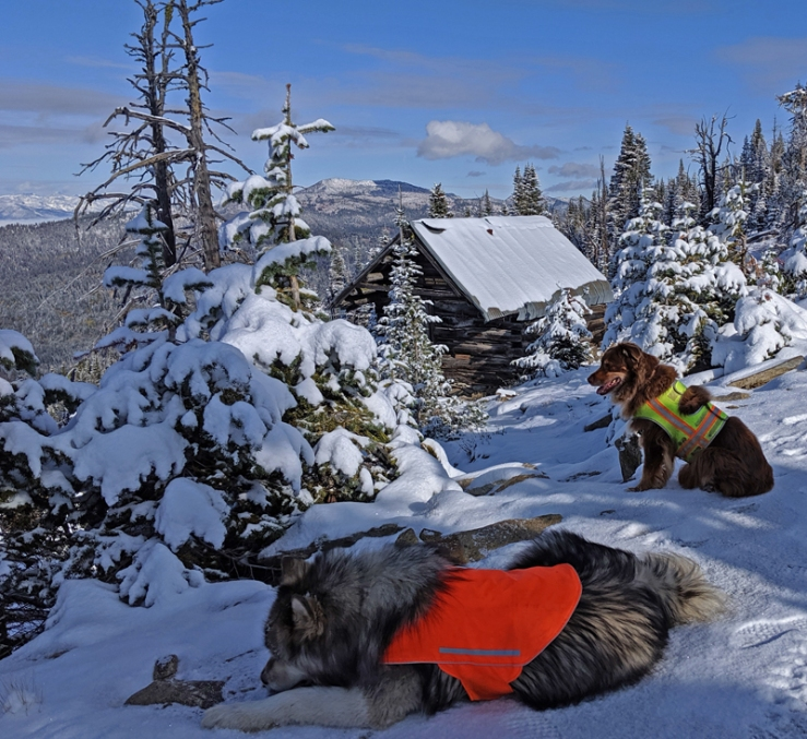 dogs, cabin, mountains