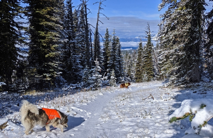 dogs, mountain trail