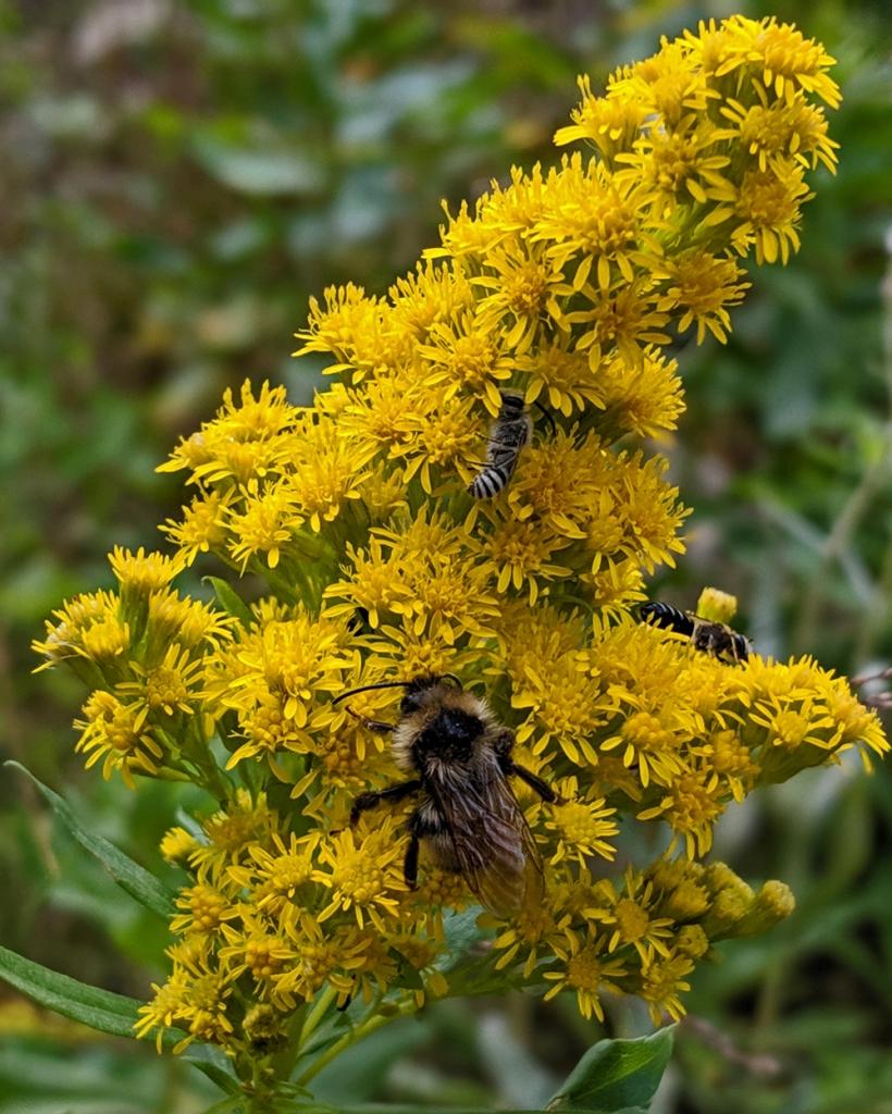 wildflower, bee