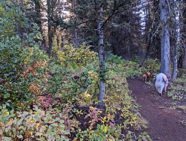 dogs on trail