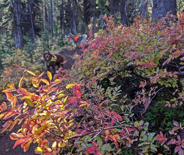 fall foliage and dogs