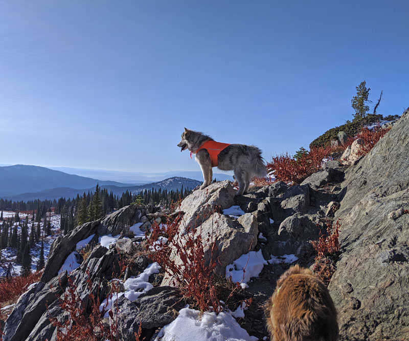 dogs, mountains