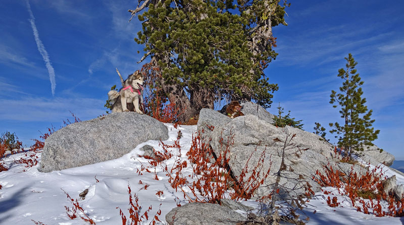 dogs on mountain