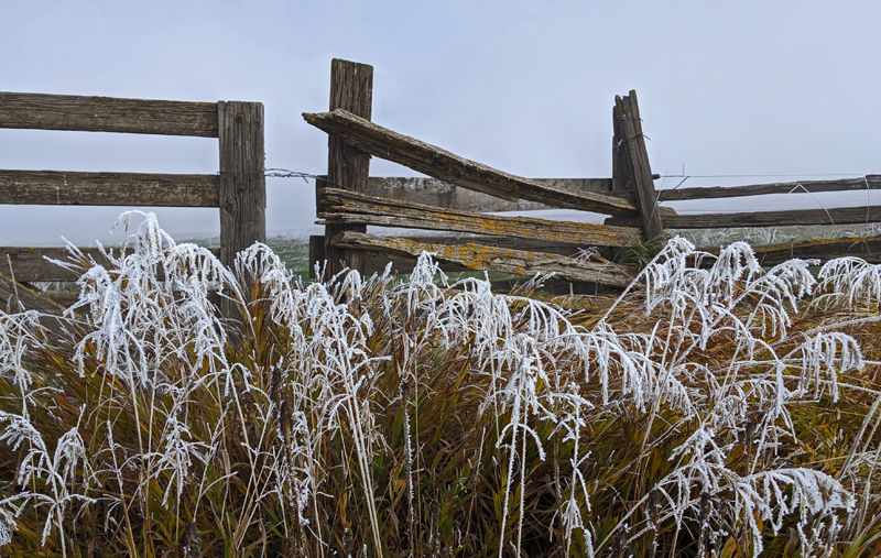 frost on grass, fence