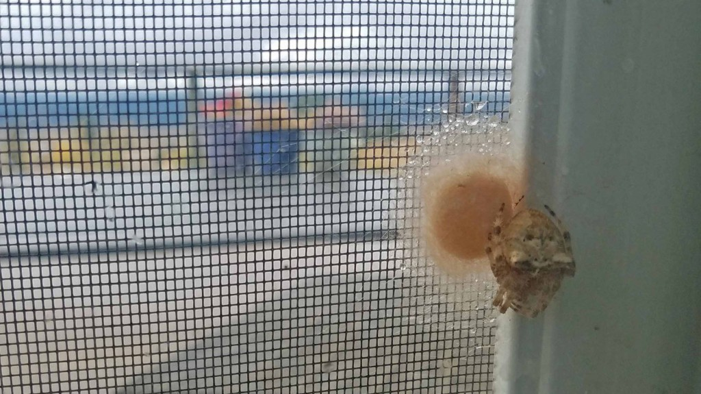 spider and cocoon on screen