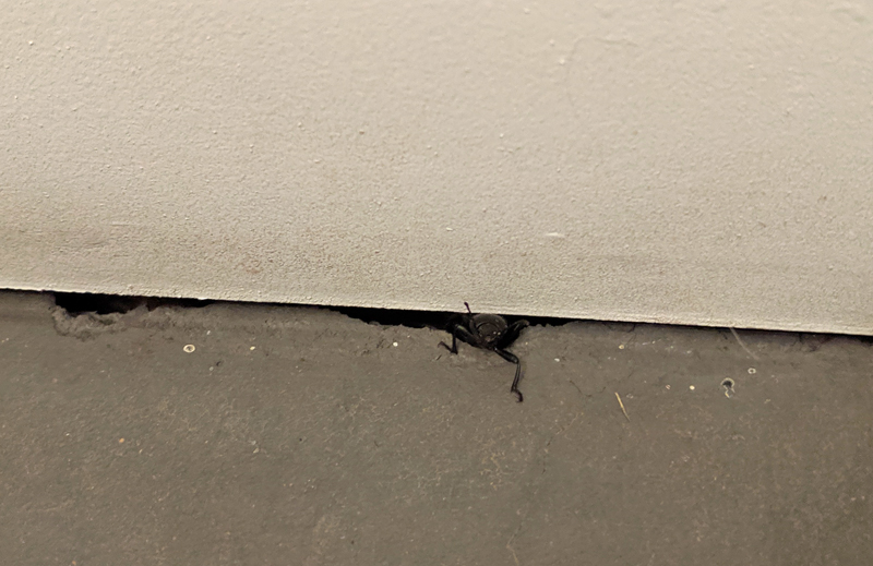 bug under wall