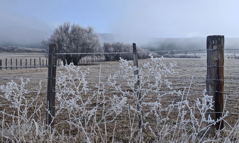 frost, fence, pasture