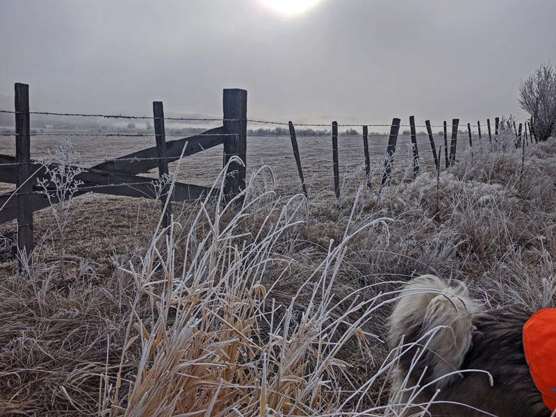 dog, fence, pasture