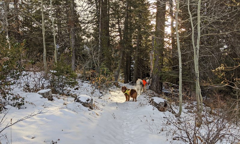 dogs on snowy trail