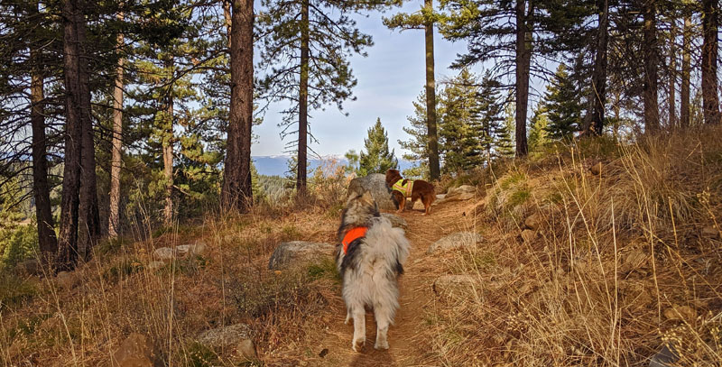 dogs on forest trail