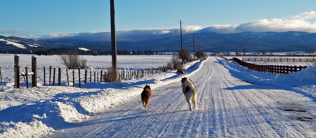 dogs running on snowy road