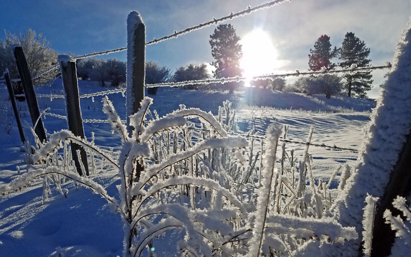 frosted plant and fence