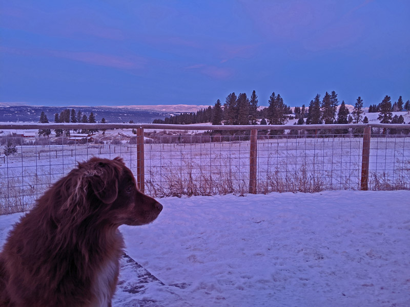 dog, fence, mountains at sunrise