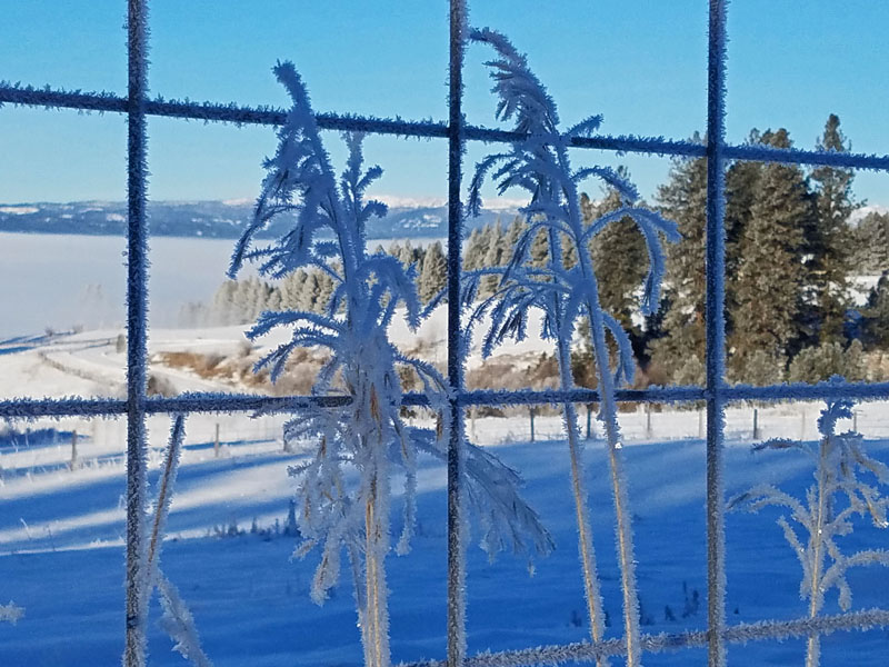 frosted grass fronds and fence wire
