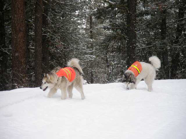 two dogs on snow