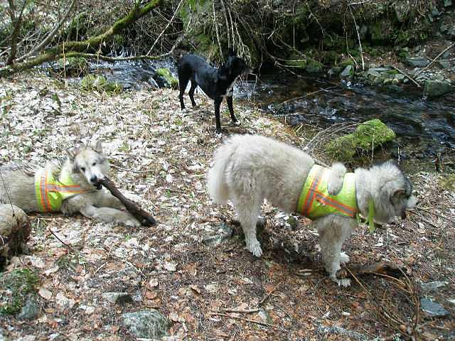 three dogs near creek