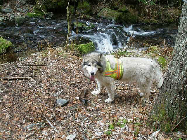 dog near creek