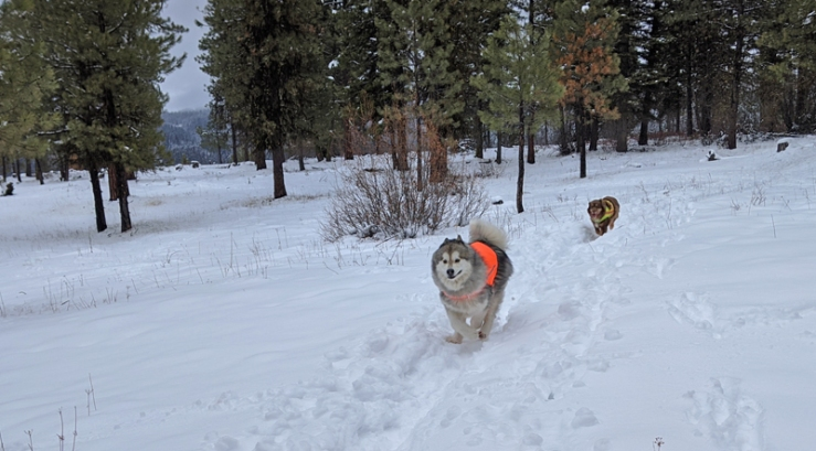 dogs running in snow