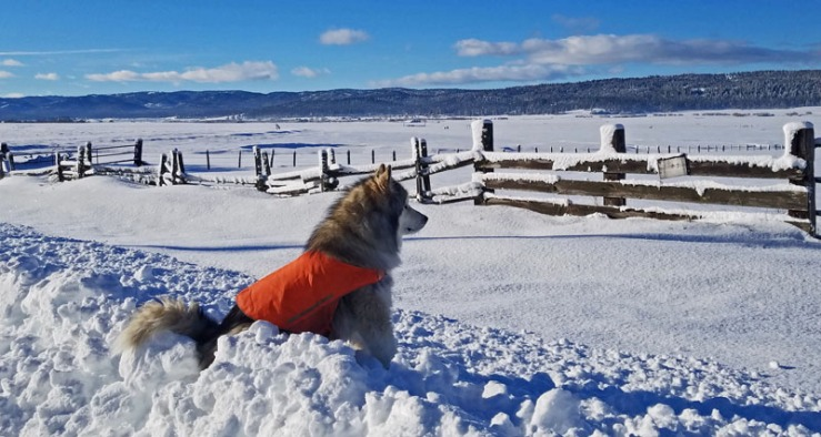 dog in snow with fence