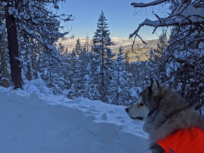 dog in snow with view