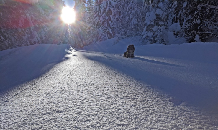 dog on snow, sun