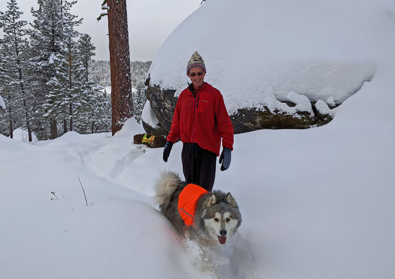 man and dogs in snow