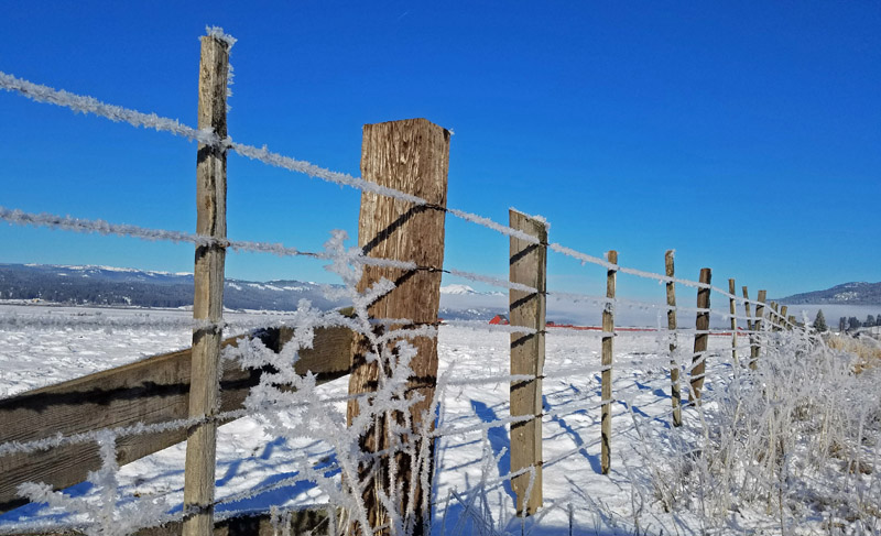 frost on barbed wire fence