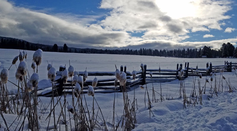 cattails and split rail fence
