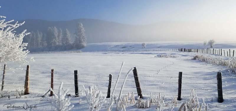 animal tracks through snowy pasture