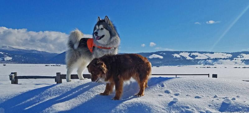 dogs on snow