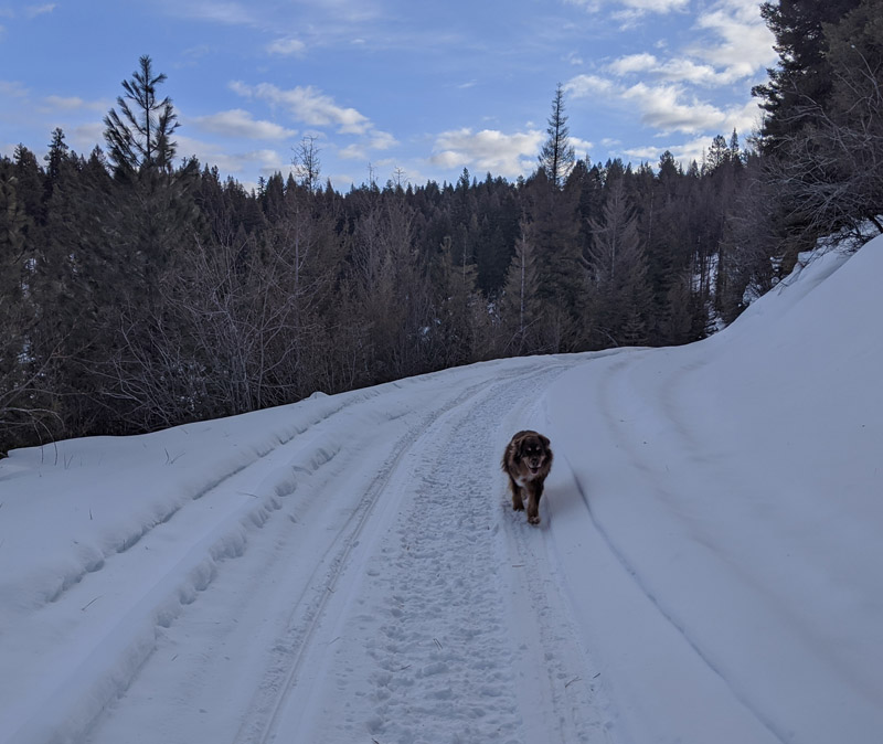 dog on snowy trail