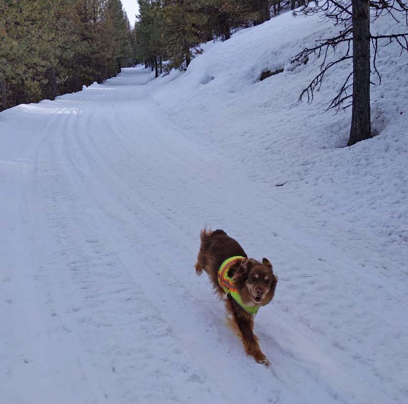 dog running on snow