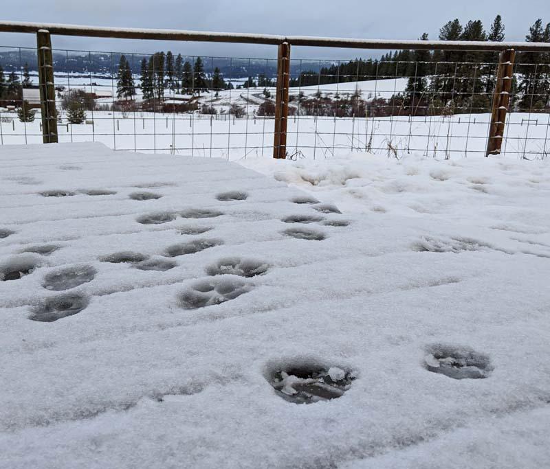 dog prints in snow
