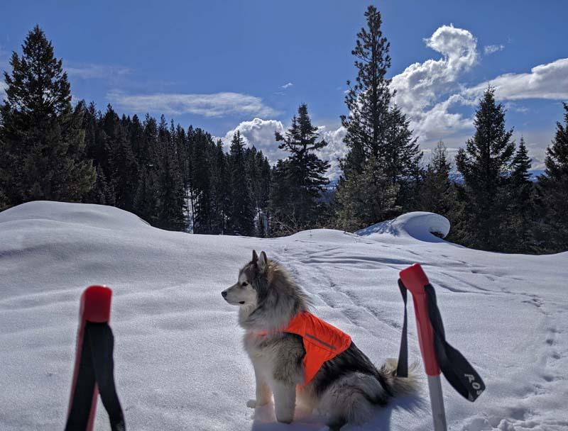 ski poles, dog, snow, clouds