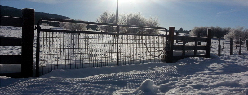 frosty gate and fence