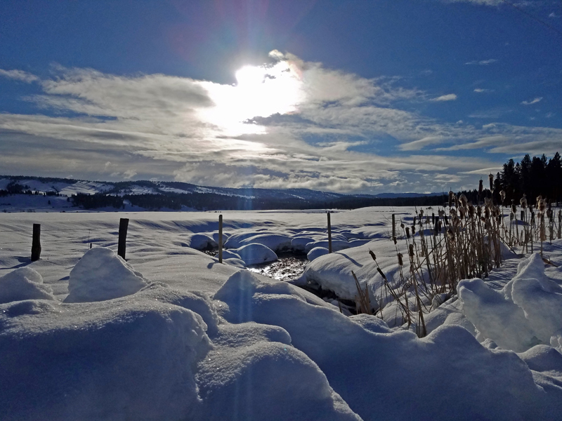 snow, fence, cattails