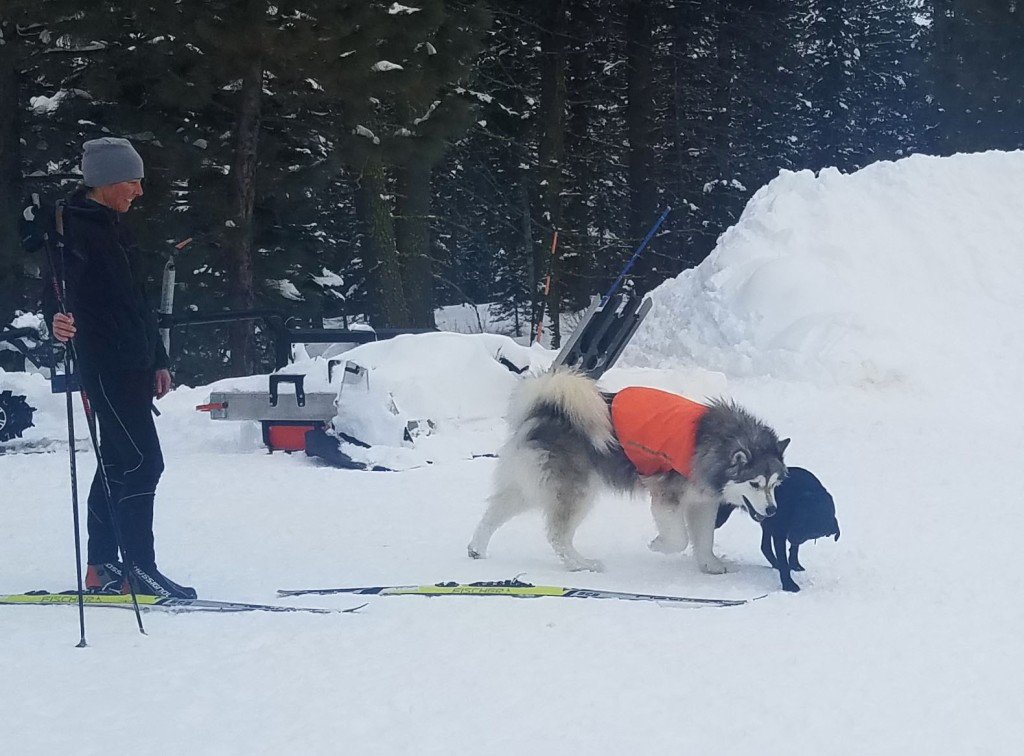 person and dogs on snow