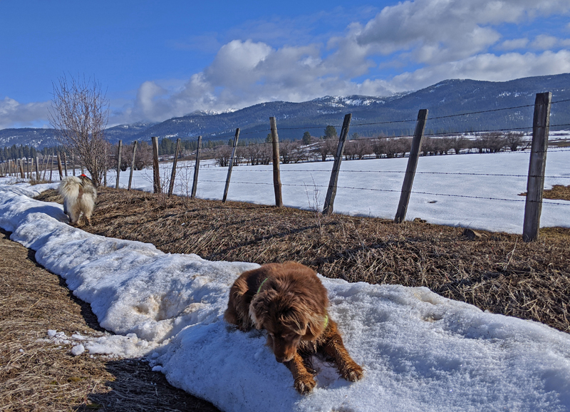 dogs, snow, fence