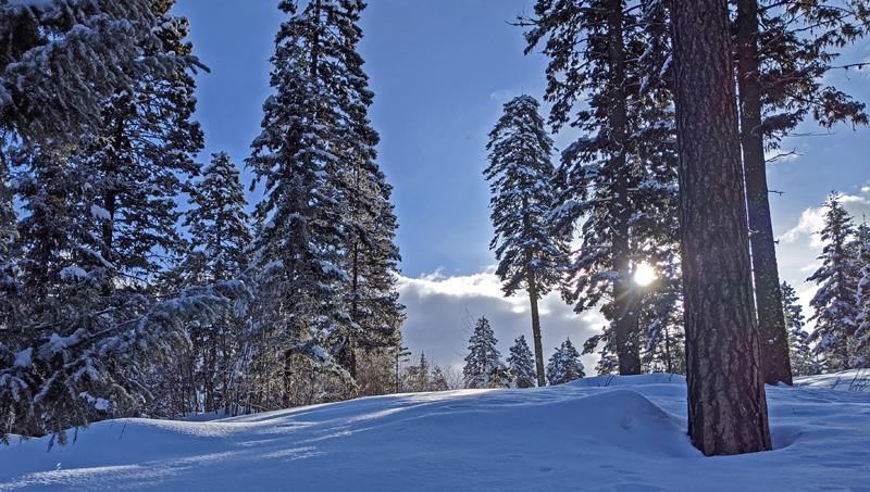 sun, snow, trees