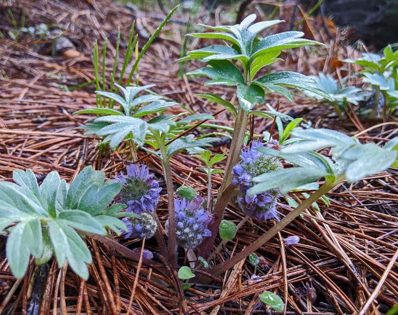 wildflowers and pine needles