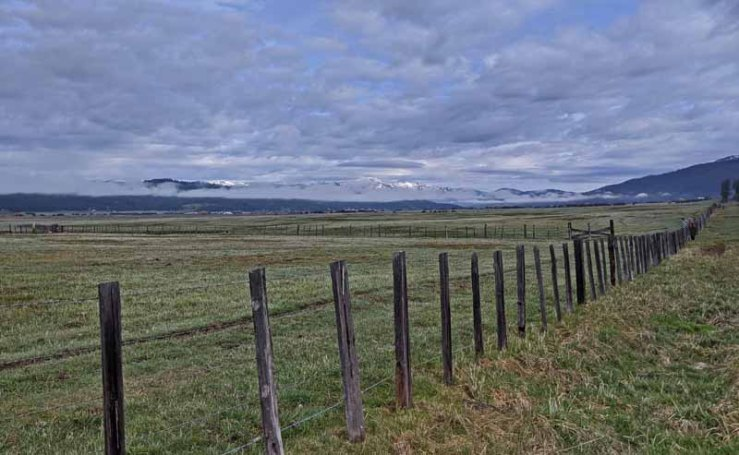 fence and pasture